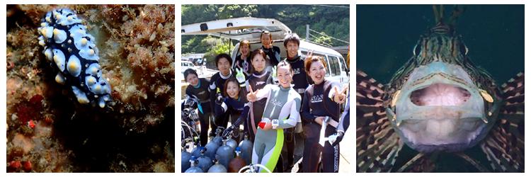 静岡ダイビングショップフリースタイル西伊豆日帰りツアー