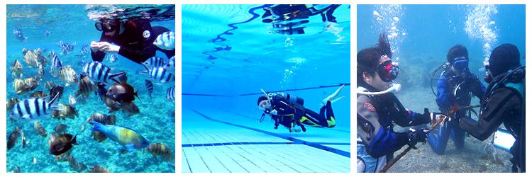 フリースタイル体験ダイビング