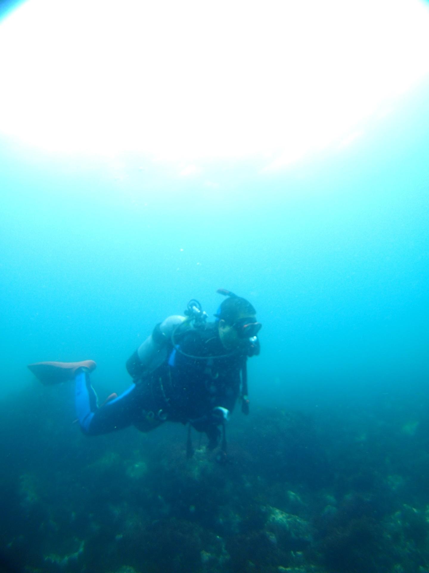 海洋公園アドバンス&ファンダイブツアー  静岡のスキューバダイビングショップフリースタイルです。