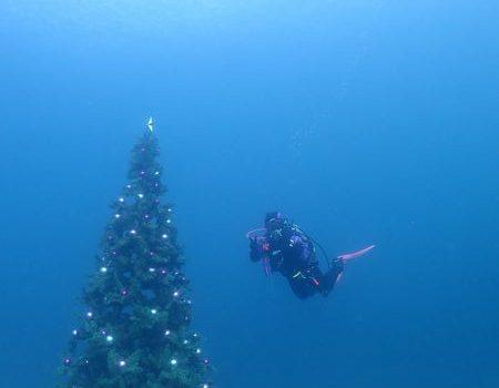 クリスマスダイブ 静岡市のダイビングショップフリースタイルです。