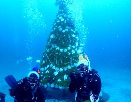クリスマスダイブ! 静岡市のダイビングショップフリースタイルです。