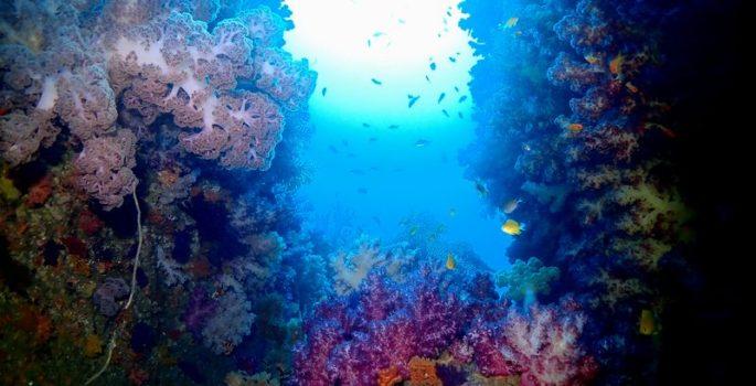 潜り納め 静岡市のダイビングショップフリースタイルです。