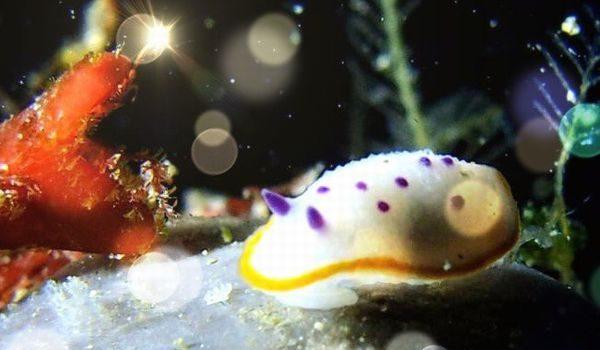 浮島でウミウシダイビング 静岡市のダイビングショップフリースタイルです。