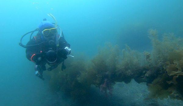 水中スクーターS1in大瀬崎 静岡市のダイビングショップフリースタイルです。