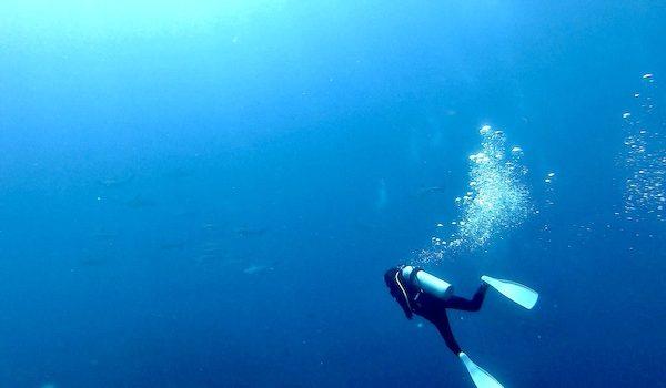神子元島ハンマーダイブ報告 静岡市のダイビングショップフリースタイルです。