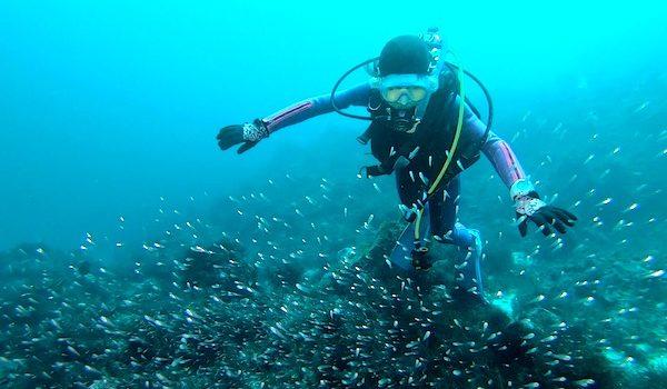 海洋公園ダイビングツアー報告 静岡市のダイビングショップフリースタイルです。