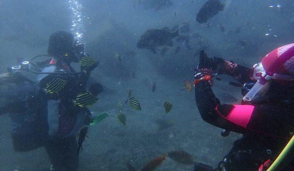 たくさんの魚たちに囲まれて… 静岡市のダイビングショップフリースタイルです。
